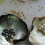 CIBJO report cites pearl trade's sustainability efforts