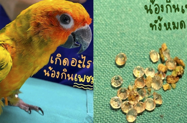 Parrot Swallows 21 Diamonds from Owner's Necklace