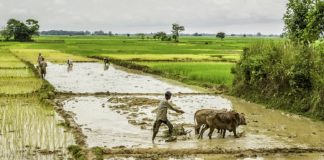 Hike in Diamond Wages to Lure Workers back from Rice Fields